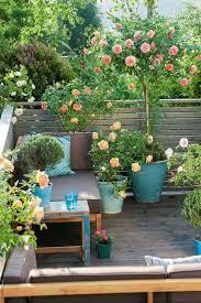climbing roses in pots garden outdoor space pinterest rose