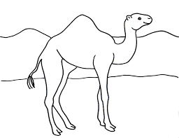 camel coloring page samantha bell