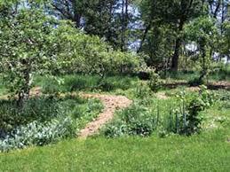 plant an edible forest garden organic gardening mother earth news