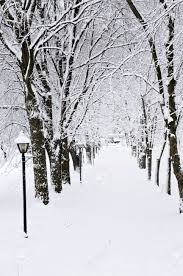 in winter park with snow covered trees stock photo picture
