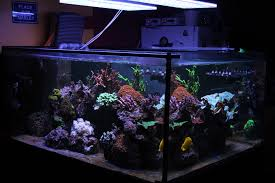 led aquarium lights for reef tanks best led aquarium light for saltwater tank france orphek