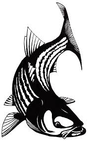 striped bass cliparts free download clip art free clip art