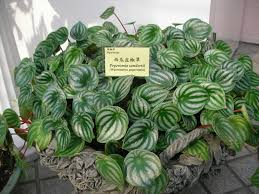 65 best indoor low light plants images on pinterest