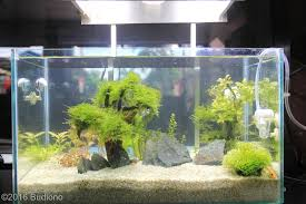 Aquascape Filter 2016 Aga Aquascaping Contest 531
