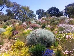 aust native plants australian native plants for rock gardens that can survive the