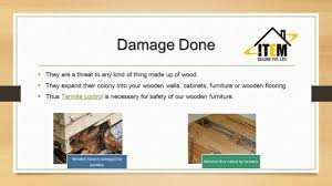 What Are Walls Made Of Anti Termite Treatment What Are Termites Termites Are A Group Of