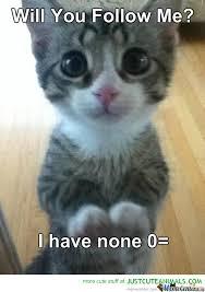 Cute Kitty Meme - cute kitty begging for followers by trollstatic meme center