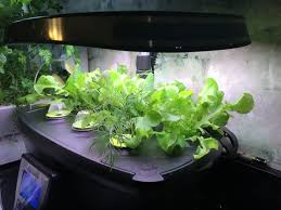 easy gardening with aerogarden no need for a green thumb
