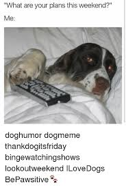 Weekend Dog Meme - what are your plans this weekend me doghumor dogmeme