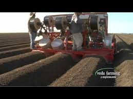Strawberry Bed Veda Farming Reverse Tiller With Strawberry Bed Former Mov Youtube