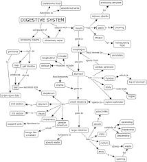digestive system worksheet pdf digestive system concept map