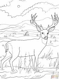 hunting coloring pages bear hunting coloring pages