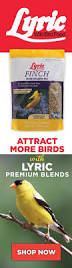 How To Attract Indigo Buntings To Your Backyard How To Prepare Your Yard For Spring Bird Migration