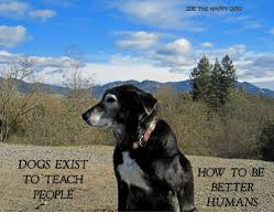 Happy Dog Meme - zoe the happy dog dogs exist to teach people how to be better humans