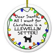 llewellin setter gifts on zazzle