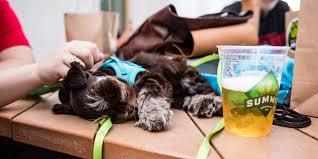 events sidewalk dog