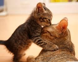 wallpaper cat whatsapp tender moment between a cat and her kitten 4k hd desktop