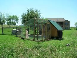 safe roomy outdoor run backyard chickens