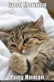 Good Morning Cat Meme - good morning puny human lolcats lol cat memes funny cats