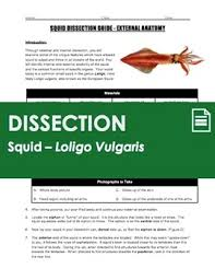 squid dissection invertebrate anatomy by science with mr enns tpt