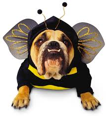 Star Wars Dog Halloween Costumes Fantasias Cachorro 23 Fantasia Pet Fantasia