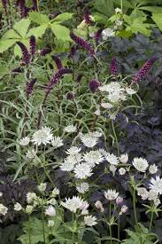 330 best plant combos images on pinterest cottage gardens