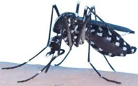 blog mosquito squad
