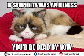 Angry Cat Meme - 114 best funny cute angry grumpy cats memes images on pinterest