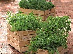 Fragrant Container Plants - choosing fragrant flowers and plants planting plants and gardens
