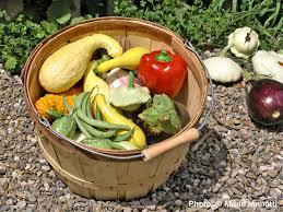 Vegetable Garden Blogs by Backyard How Start Vegetable Garden Blog Gardening Tips For
