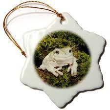 buy danita delimont frogs whites treefrog to australia