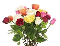 multicolored roses multicolored roses bouquets rainbow avril s floral design