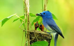 birds latest 60 new wallpapers full images