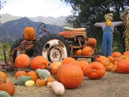 Local Pumpkin Patches Portland Area Pumpkin Patches Hillside Imports