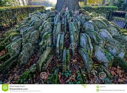 hardy s tree stock image image of graveyard 50981697