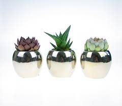 trio of succulent plants in mirror finish indoor planters u2013 the