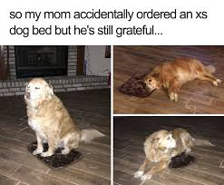 Animal Meme - 40 wholesome animal memes that will save your monday veriy