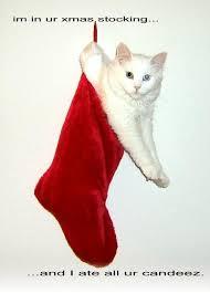 Stocking Meme - i m in ur xmas stocking cat meme cat planet cat planet