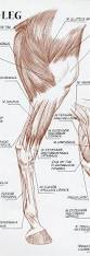 Photos Of Human Anatomy Best 20 Animal Anatomy Ideas On Pinterest Dog Anatomy Dog