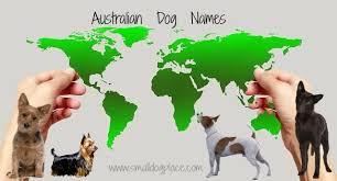 australian shepherd dog names australian dog names perfect for the aussie and non aussie puppy