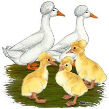where can i buy duck 14 best ducks for sale images on baby ducks paintings