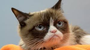 Original Grumpy Cat Meme - memes and the science of why things go viral sbs science