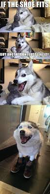 Pun Husky Meme - 103 best the pun dog images on pinterest funny stuff corny jokes