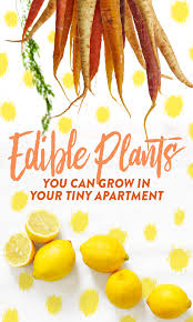 15 edible plants you can grow in your tiny apartment