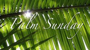 palm branches for palm sunday the triumphal entry palm sunday 2012 fishin