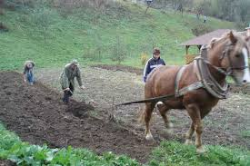 ploughing the vegetable garden slovakia cottage