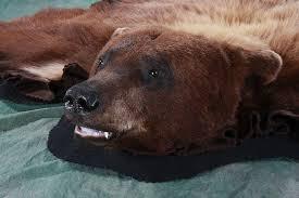 Taxidermy Bear Rug All American Taxidermy Taxidermy Gallery Taxidermy Studio In