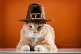 15 animals dressed for thanksgiving he s seen some things guff