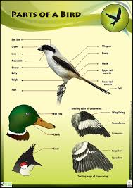 birds pictures for kids