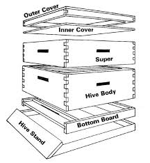 Top Bar Beehive Plans Free How To Build Bee Boxes Beekeeping Pinterest Bee Boxes Bees